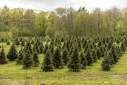 Tuckaway Tree Farm Christmas Trees