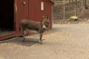 Tuckaway Tree Farm Donkey